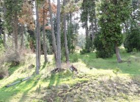 209 Acre parcels, buildable, timber, homesite, Fish stocked Pond.